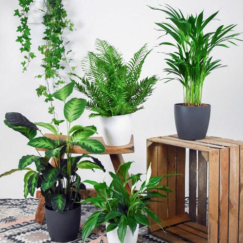بهترین گیاهان برای پاکسازی هوای خانه