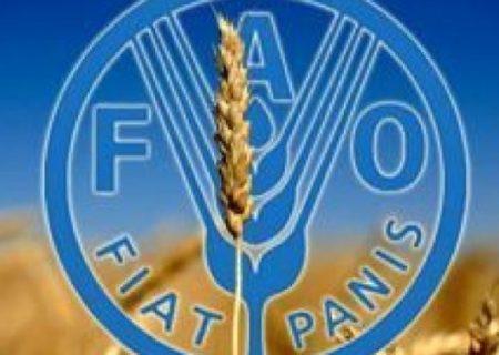 هشدار فائو برای تهدیدهای امنیت غذایی در شرایط کرونا