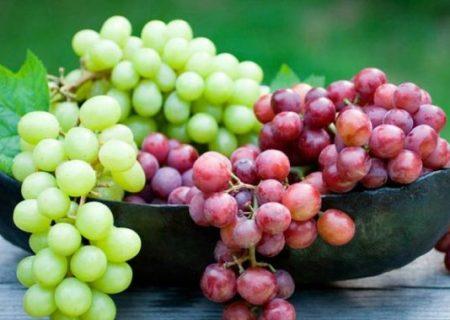 فوایدی که خوردن انگور برایتان رقم میزند