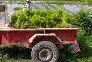 طرح یاوران تولید؛ ضامن امنیت غذایی کشور