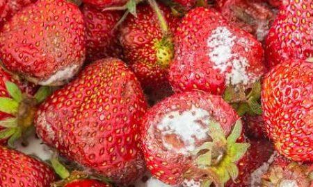 خطر مصرف میوههای کپکزده