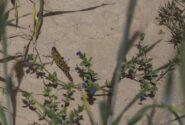 ۱۰ میلیارد تومان برای مبارزه با ملخ صحرایی اختصاص یافت