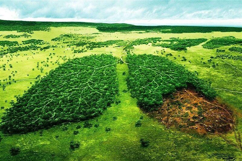 تاثیر کرونا بر محیطزیست هزینهبر است