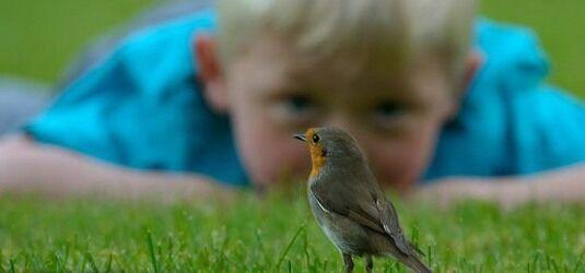 استرس را با پرندگان از خود دور کنید
