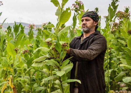 پرداخت ۶ هزار میلیارد تومان تسهیلات برای مناطق روستایی
