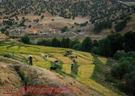 اجرای طرح کاداستر در ۱.۴ میلیون هکتار از اراضی کشاورزی