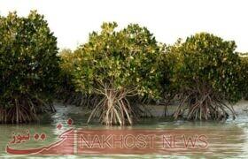 جنگلهای مانگرو، معجزه طبیعت